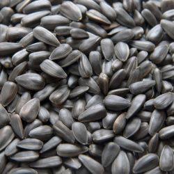 aycicek-tohum